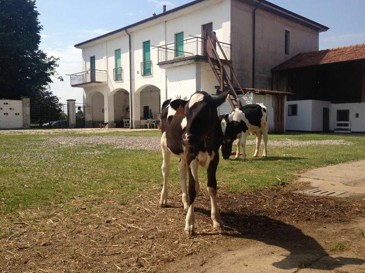 cascine e fattorie a due passi da Milano