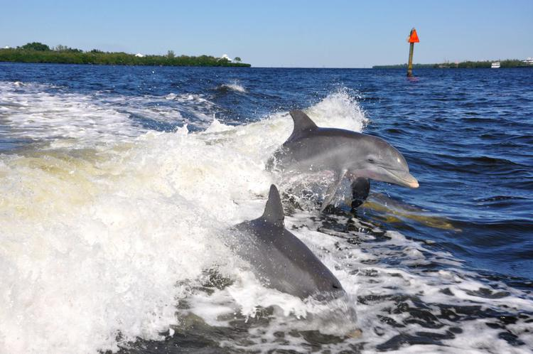 Boats n More - Bootstour und viele Delfine