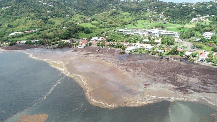 Invasion des algues sargasses dans la ville du Robert en Martinique© Ville du Robert