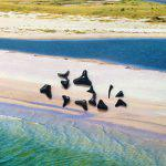 Tipps für Haifischzähne sammeln
