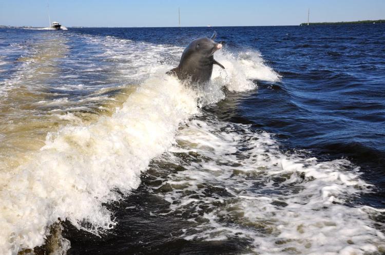 Boats n More - Bootstour mit Delfinen
