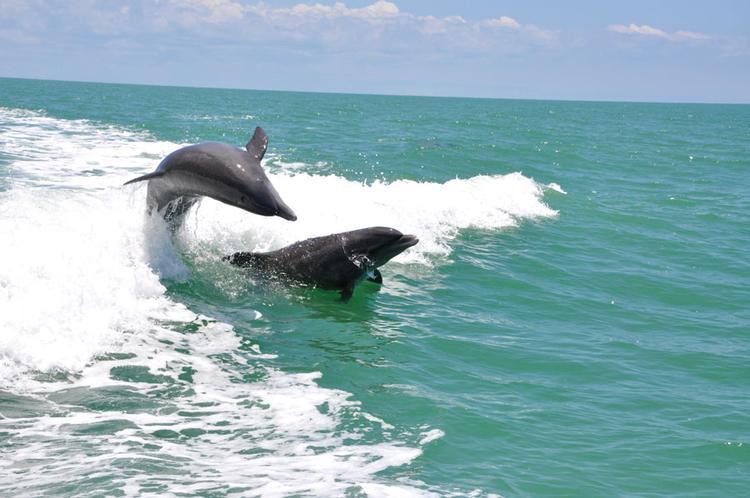 Delfin Tour mit einem Speed Boot