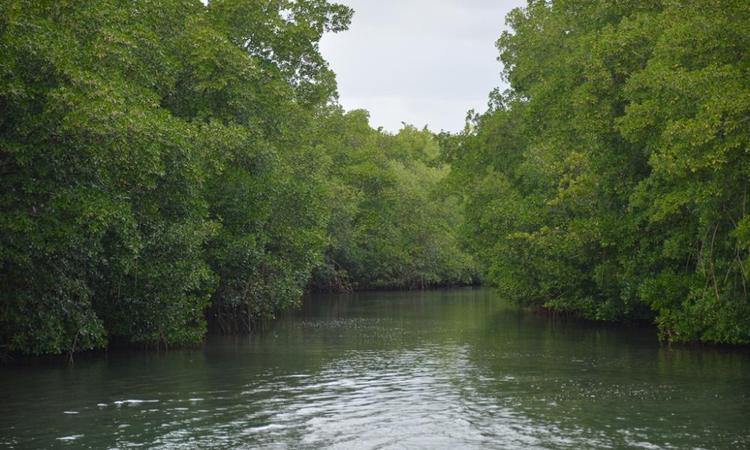 © Parc naturel de la Martinique