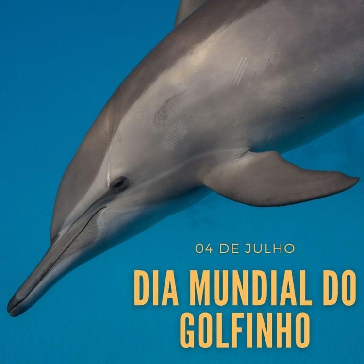 Curiosidades incríveis sobre os Golfinhos
