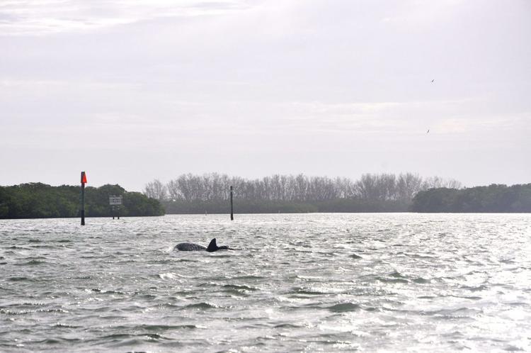 Delfine in den frühen Morgenstunden