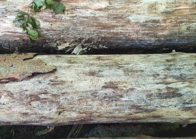 Détail bois atteints