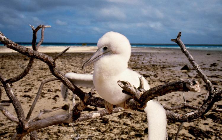 Jean-Pierre Marquant : le coureur d'atolls, oiseau marin