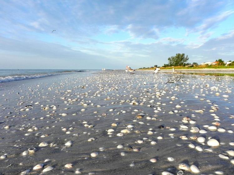 Strand von Sanibel Island - Tipps Muscheln sammeln