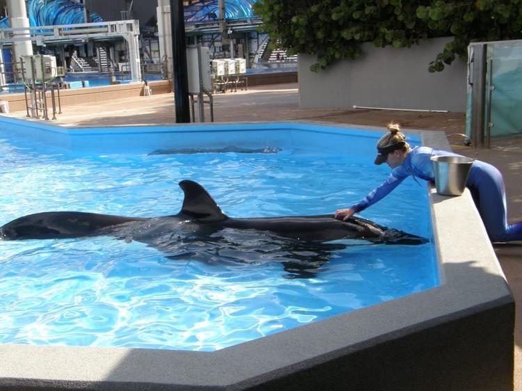 Eine Trainerin erklärt einiges über die Orcas.